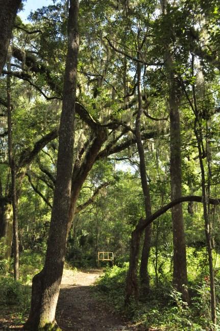 Hogtown Creek Headwaters Nature park