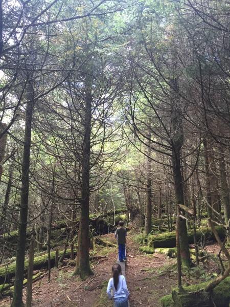 spruce_fir_nature_trail