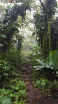 Rainforest, Saba