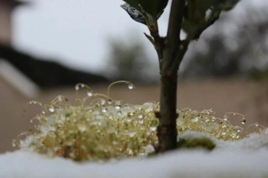 il a neigé sur Bordeaux - les lubies de louise (3 sur 4)