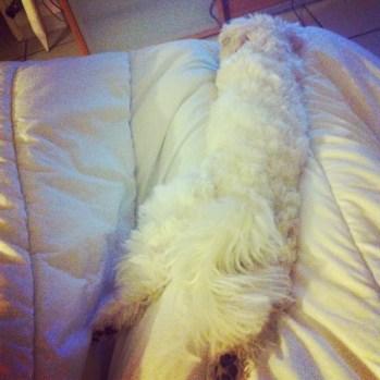 c'est dur la vie de chien...