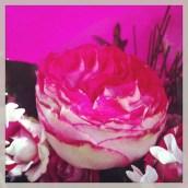 Des jolies fleurs de ma fleuriste préférée :D