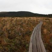 Nouvelle Zélande - Tongariri national parc - Les lubies de louise (2 sur 25)