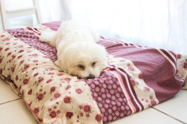 Tapis de luxe Flora - DIY tapis pour chien - les lubies de Louise (2 sur 8)
