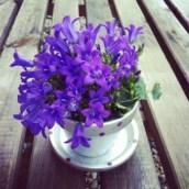 Ma petite fleur offerte au salon du mariage