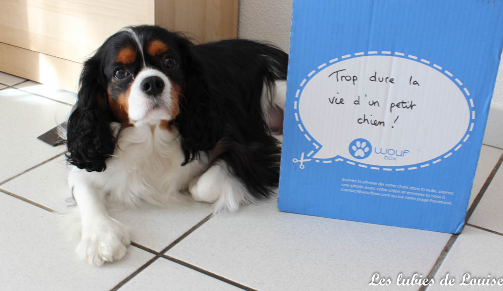 Wouf Box Octobre Balade Les Lubies De Louise 8