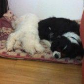 Non mais qu'est-ce qu'elles font pour être si fatiguées !!