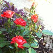 Petit tour à la jardinerie pour décorer le jardin