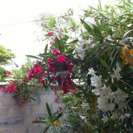 Ouvrir les volets de regarder les petites fleurs