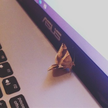 Papillon geek !