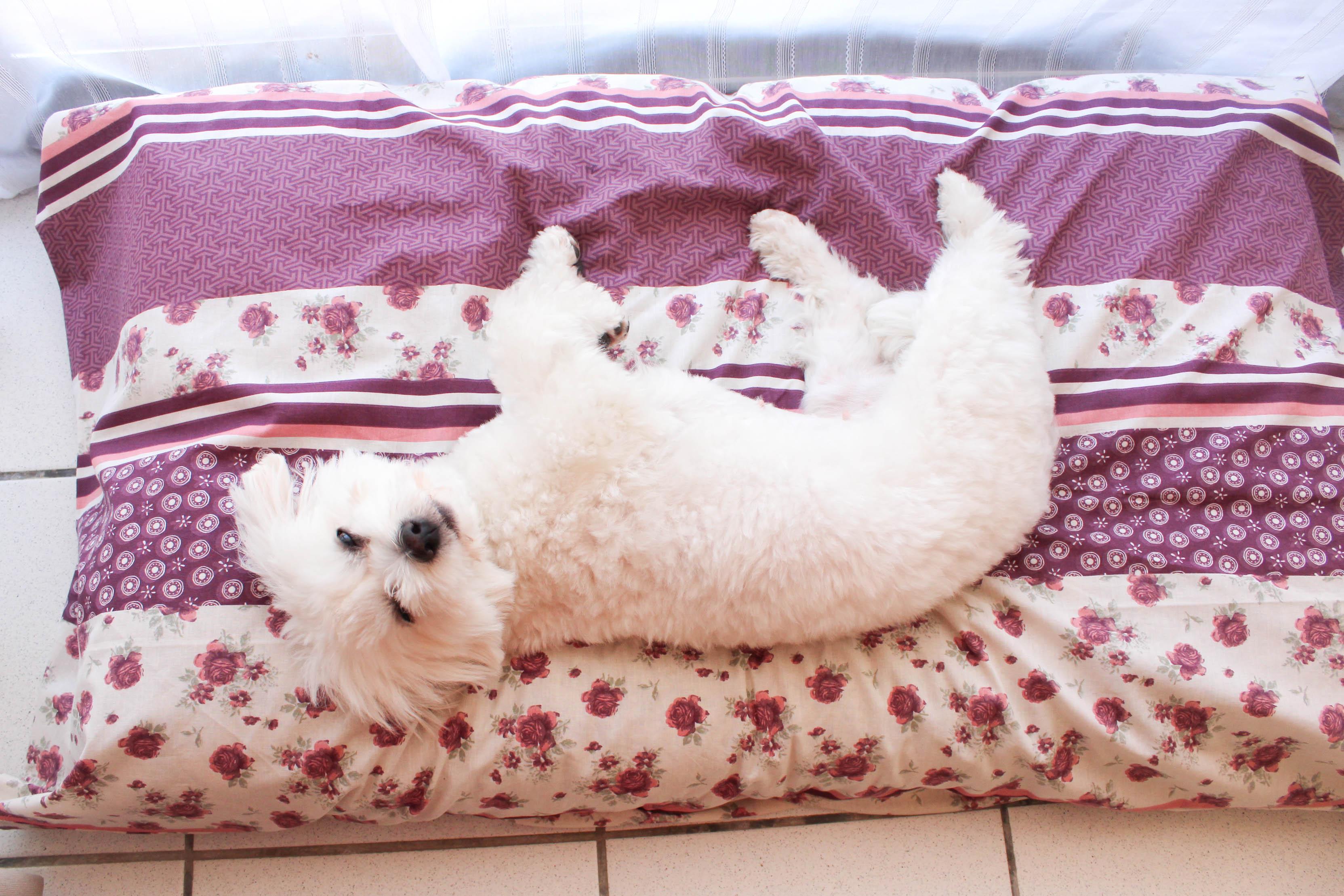 tapis de chien les lubies de louise. Black Bedroom Furniture Sets. Home Design Ideas