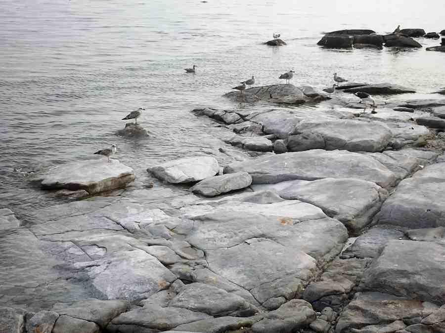 Les oiseaux sur les rochers de penmarch