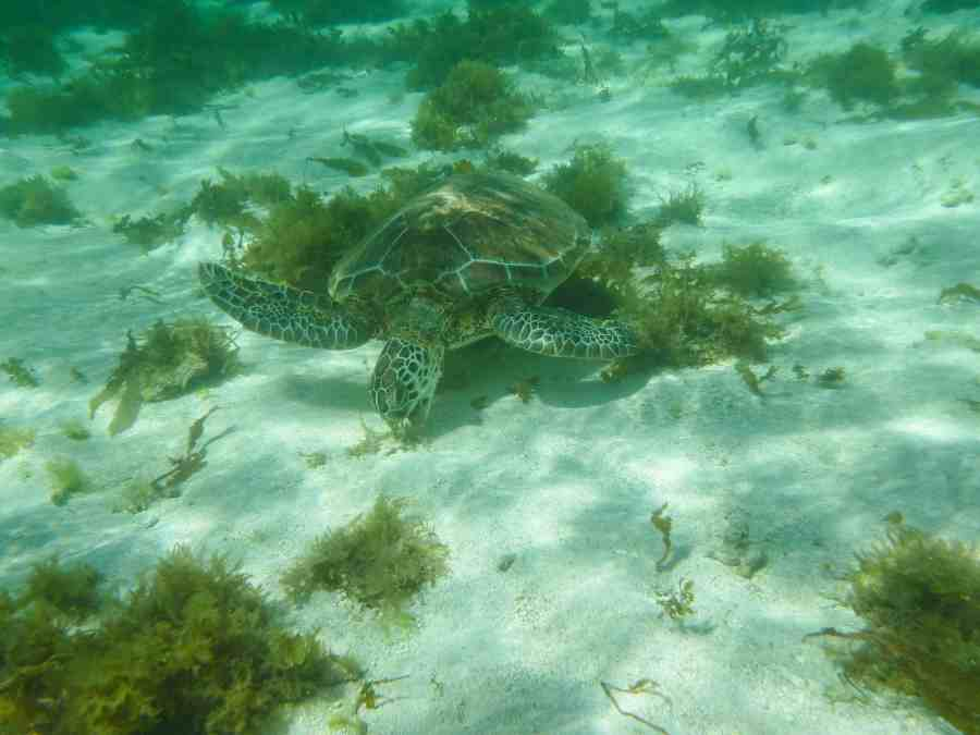 ile-petite terre-carabes-guadeloupe-tortue-nature-mer-snorkeling