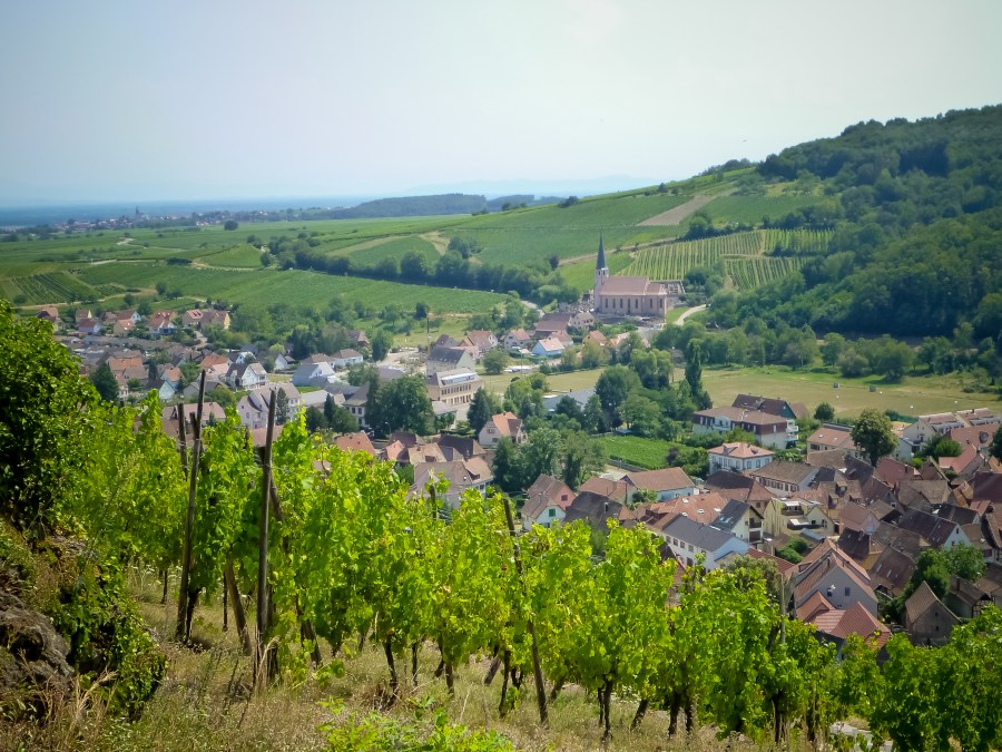route des vins-alsace-france-vignes-hauteurs-kastelberg-andlau-mittelbergheim