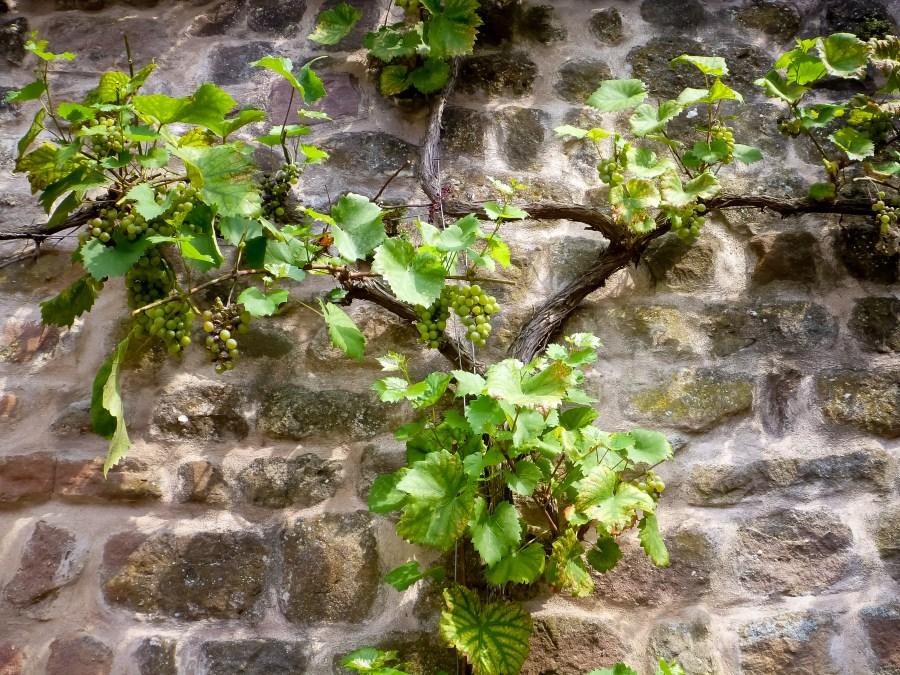 route des vins-alsace-obernai-ville-remparts-vignes