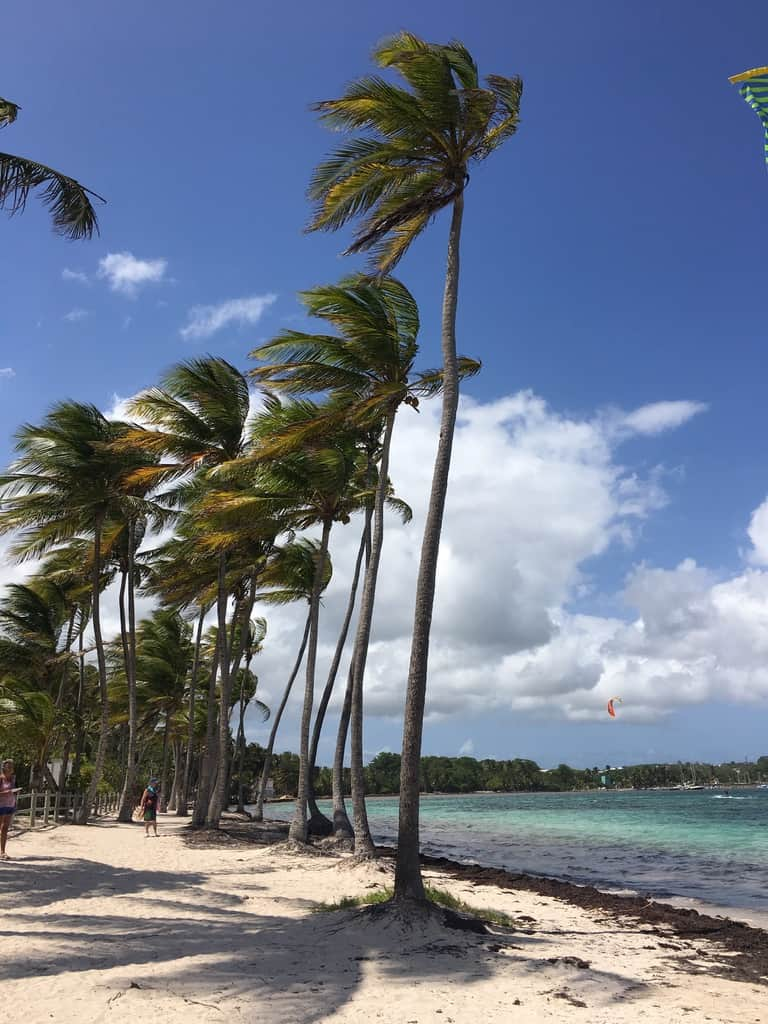 palmiers-plage-guadeloupe-caraibes-mer-sable-club med-caravelle-vent