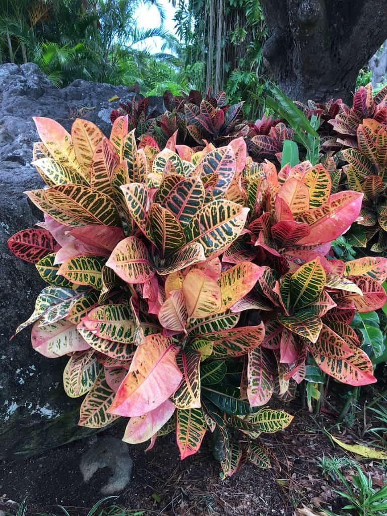 jardin-botanique-nature-fleur-caraibes-guadeloupe-basse terre-vegetation