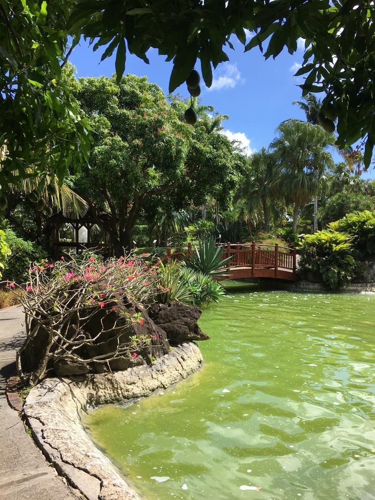 jardin-botanique-nature-fleur-caraibes-guadeloupe-basse terre-vegetation-plan d'eau-restaurant