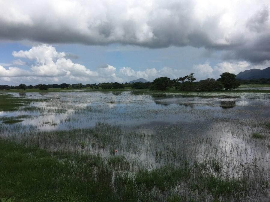 Paysage naturel au Sri Lanka