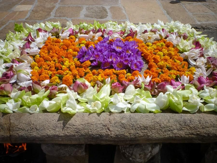 Des fleurs en offrande à Ruwanwelisaya au Sri Lanka