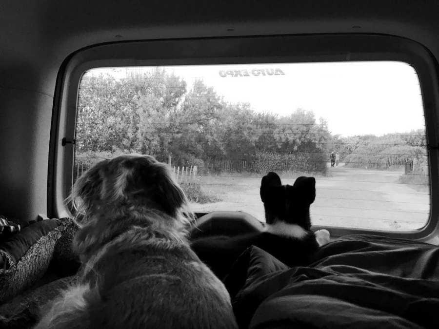 Nos chiens dans la voiture