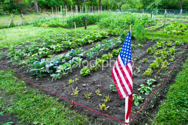 stock-photo-13293958-community-gardens
