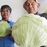 exposee-aux-radiations-de-fukushima-cette-salade-a-triple-de