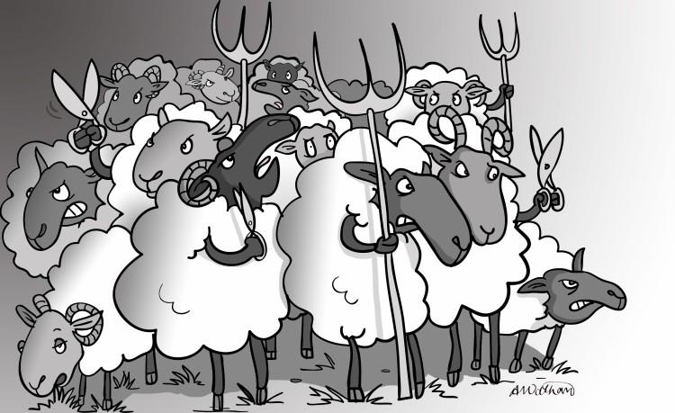 sheep-revolution