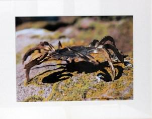 RONNE Hervé Sans titre, 2012 photographie 45x60 cm