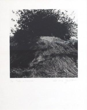 """PITROU Pierre Meule in """"Graminées"""" 2003 photographie 53x43 cm"""