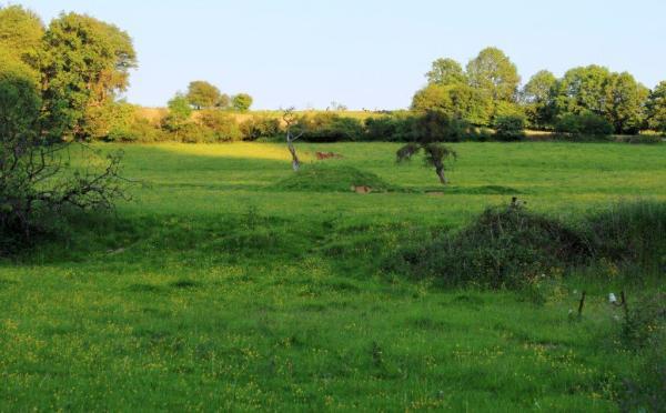 Mouflons langs de Ourthe