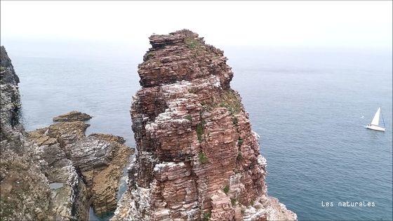 Cap Fréel