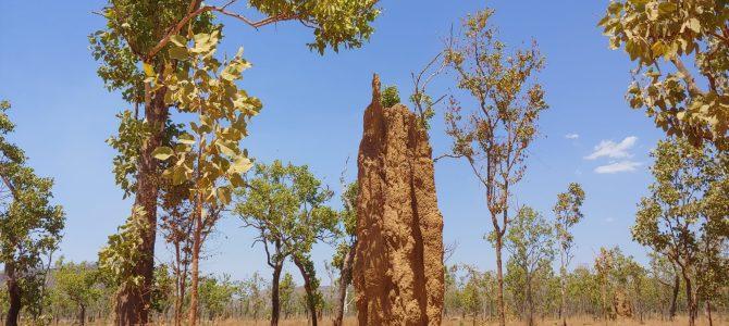 Australie – Territoires du Nord – Kakadu National Parc