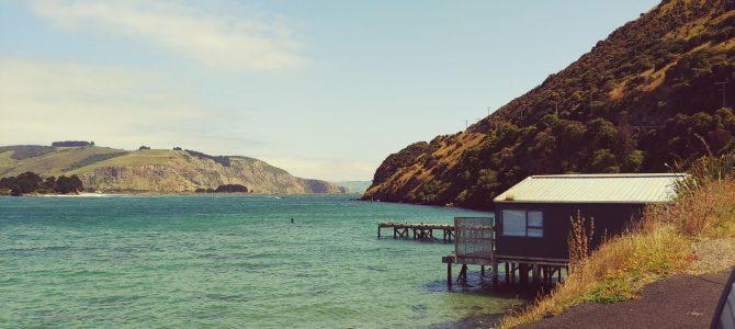Nouvelle Zélande – île du Sud – Péninsule d'Otago