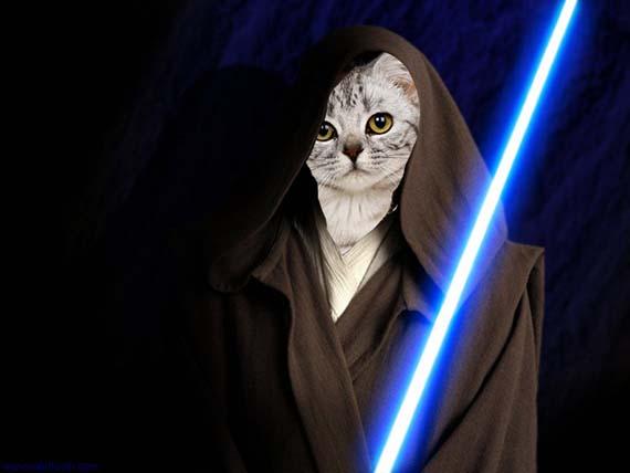Pourquoi les chats sont nos gurus ?