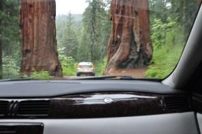 Sequoia-01