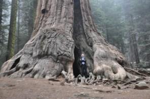 Sequoia-02