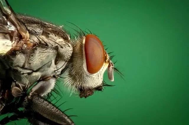 Read more about the article Comment se débarrasser des mouches dans la maison