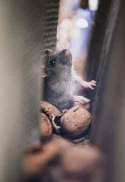 une souris dans un trou