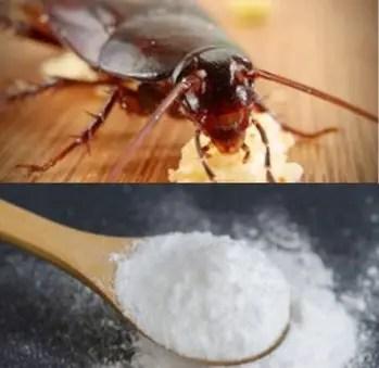 Bicarbonate de soude contre les cafards