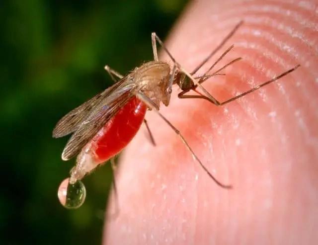 Comment calmer une piqure de moustique