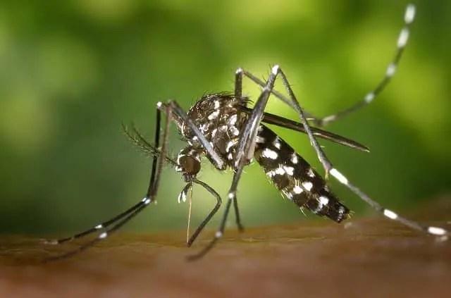 quelle huile essentielle pour éloigner les moustiques tigres