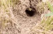 un nid sous terre