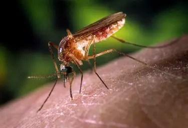 Comment soigner une piqûre de moustique qui gonfle et chauffe