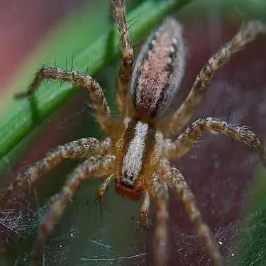 Comment se débarrasser des araignées dans le jardin ?