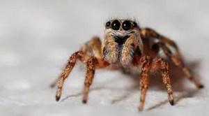 Piqûre d'araignée qui gratte: que faire?