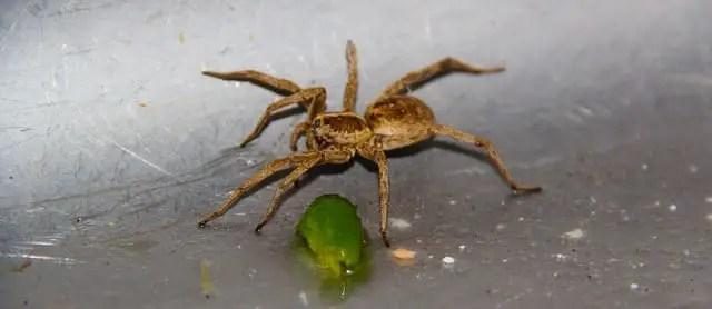quels sont les meilleurs produits pour tuer les araignées
