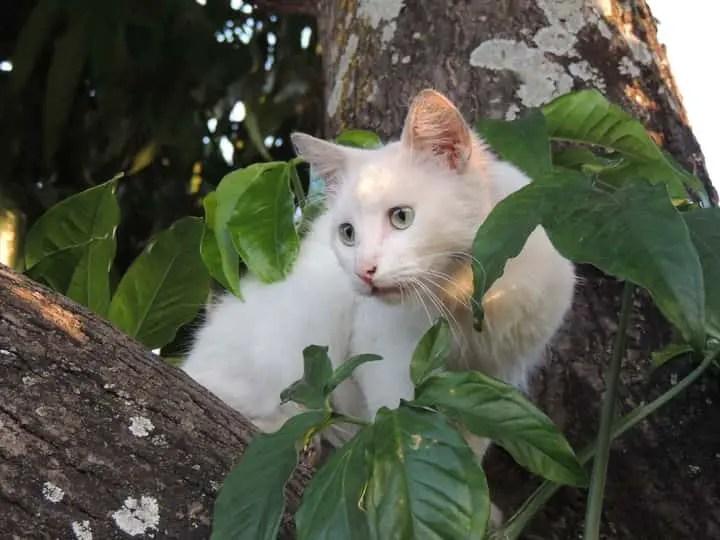 Un chat sur un arbre