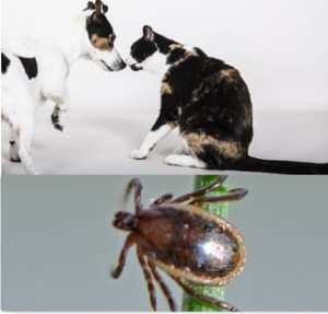 Solution contre les tiques de chien et de chat