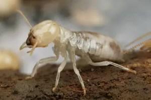 Comment se débarrasser des termites dans une maison naturellement ?